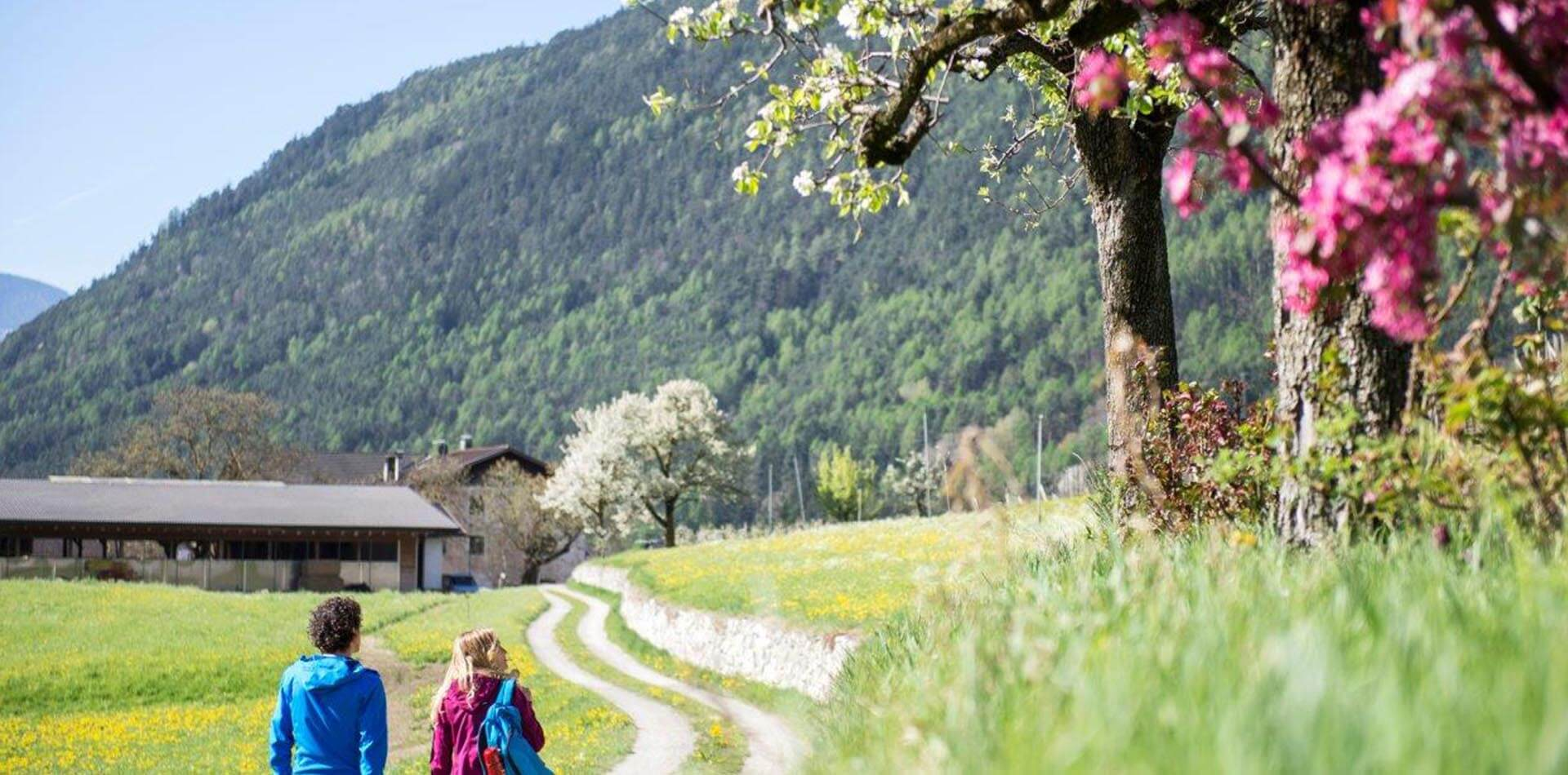 Primavera in Valle Isarco